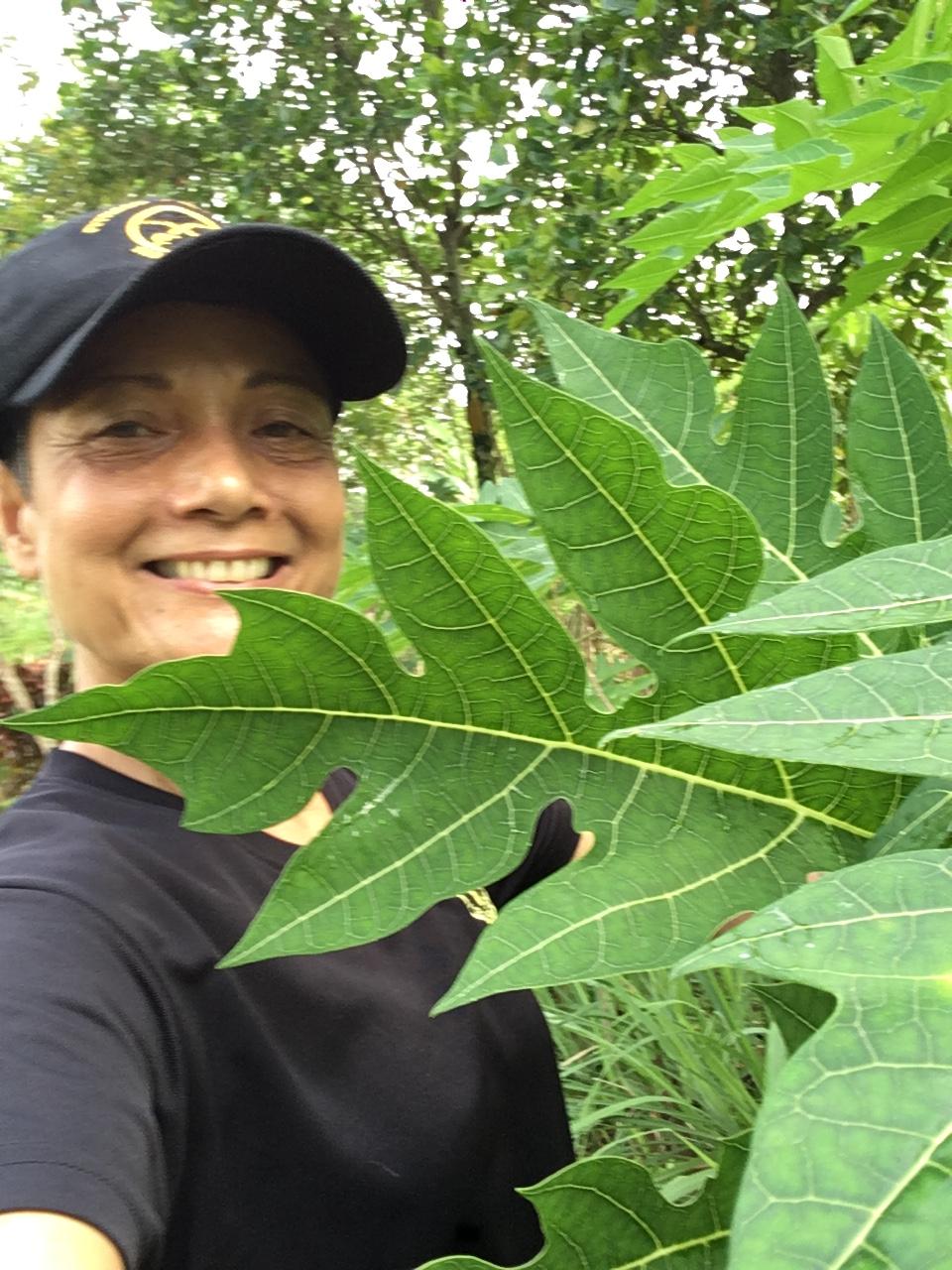 Ajuntha showing some papaya Leaves