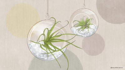 5 Things You Need to Know about Air Plants