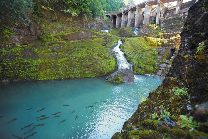 ELWHA RIVER FISH WEIR -