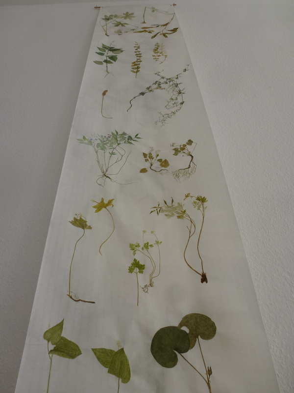 Detail from _Lone Valley Herbarium Scroll I_, watercolor illustrations on 10 m x 46 cm Mulberry-tree paper, 2013. By Brigitte Potter-Mael