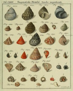 Image credit: Shells by artvintage1800s, Flickr, CC BY