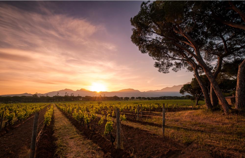 Cómo afecta el clima al tipo de vino