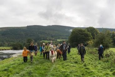 Alpaca trekking (credit: Velvet Hall Alpacas)