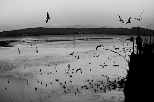 Cramond wildlife (credit and copyright: Andrew Palmer)