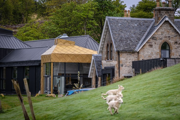 Isle of Rassay Distillery in the spring with lambs