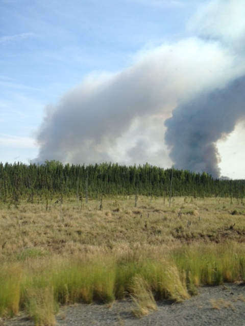 Day 7 Forest Fire_s
