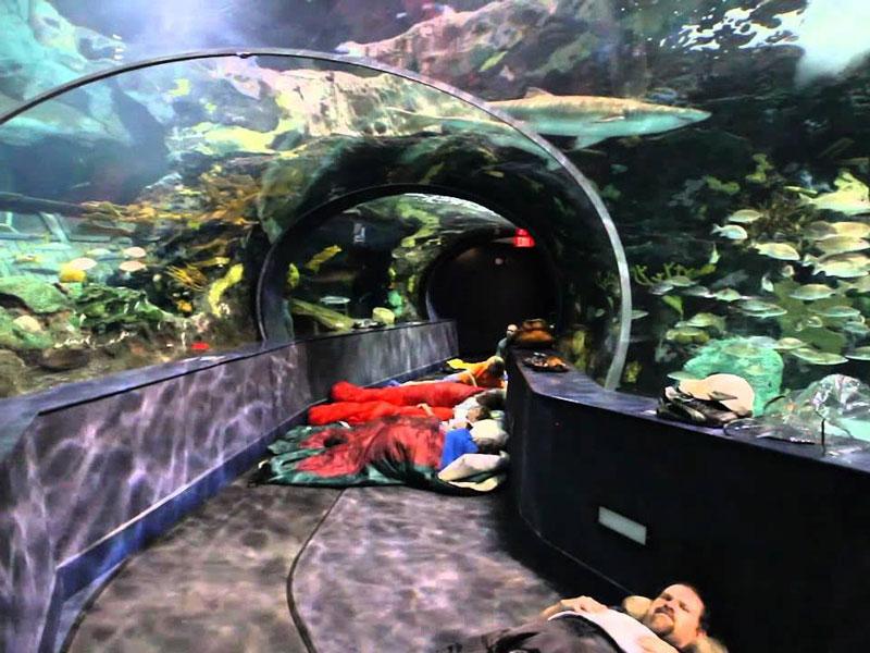 4-Aquarium