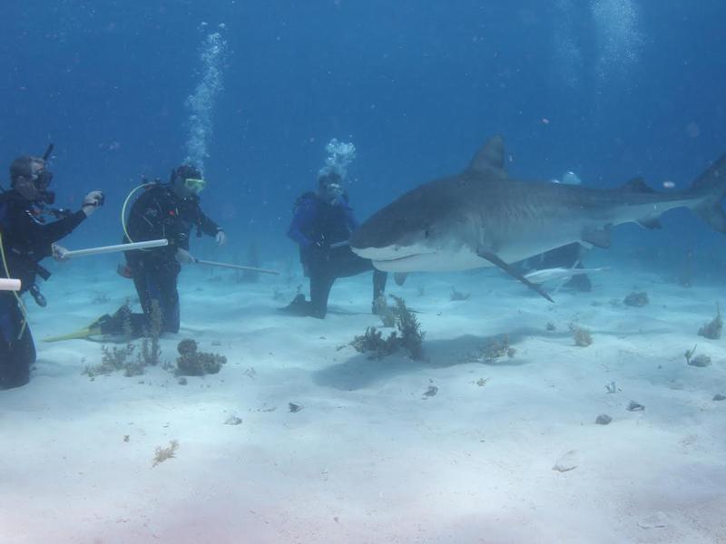Crew-820-underwater-1