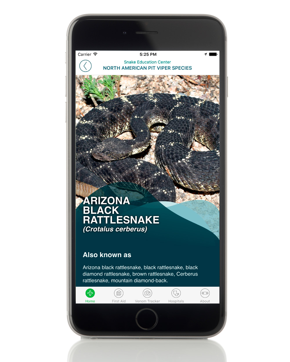 What to do (and what not to do) when bitten by a venomous snake