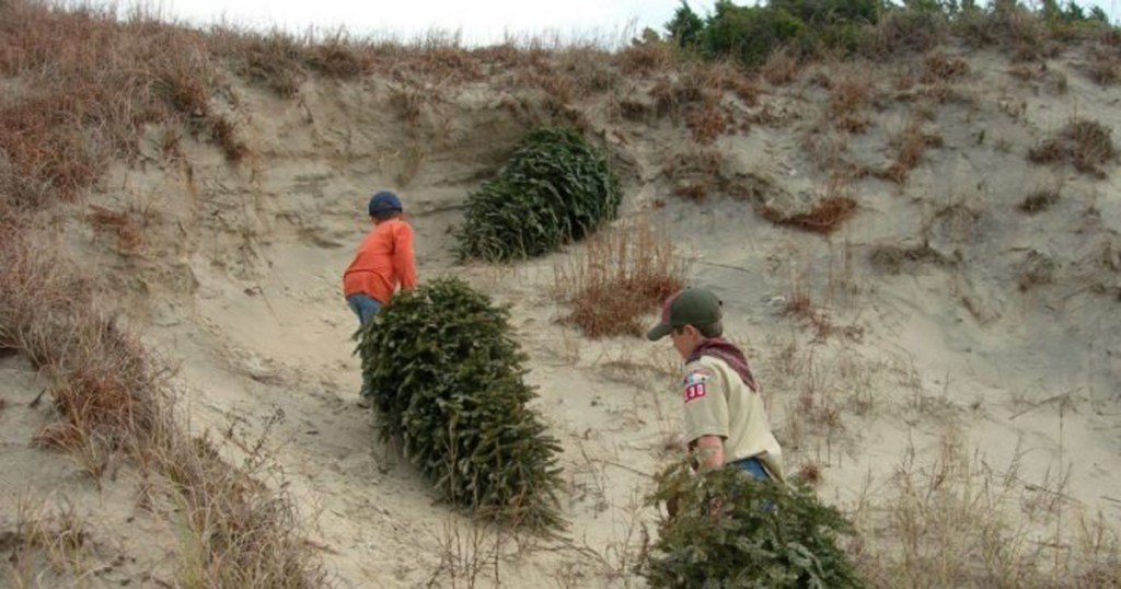 Oh, Christmas tree! Troop's unique project blends service, fundraising, conservation