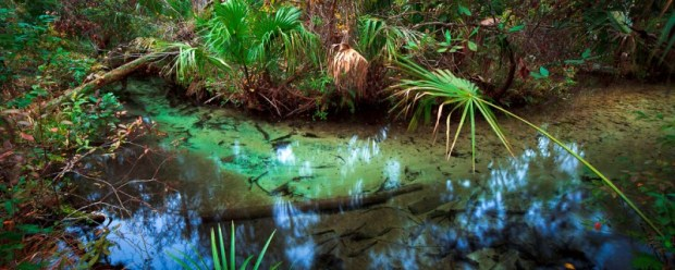 Richard explored deep into waterways in the Silver Springs area, discovering and recording a seldom-seen Florida.