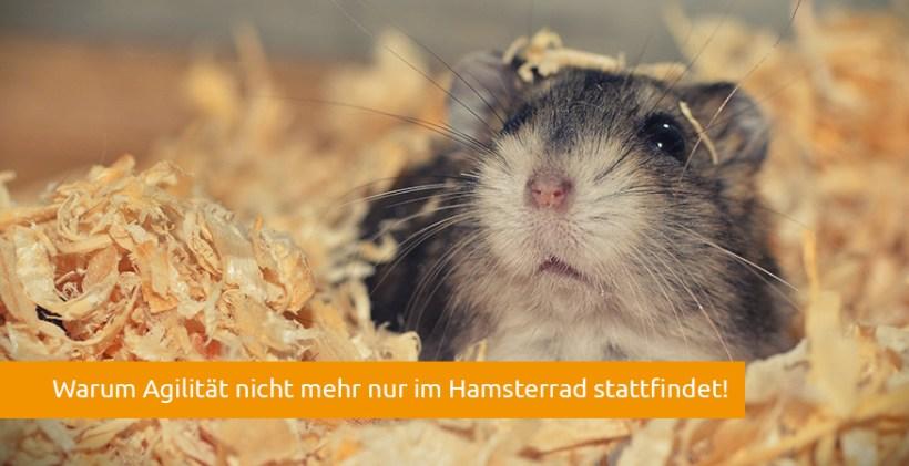 agilität-in-unternehmen-hamster