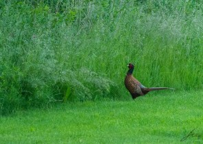 Hey there... On more move and Spuff! in the grass! Capisci!?
