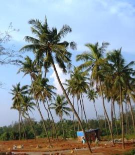 Panambur Thennai
