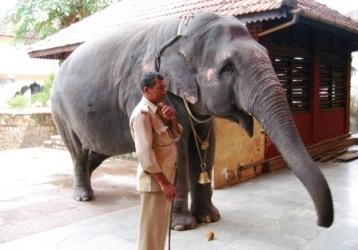 Udupi Elephant