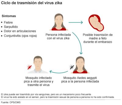 Ciclo de transmision del virus Zika
