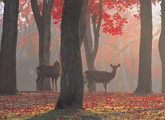 奈良公園 | 東南旅遊