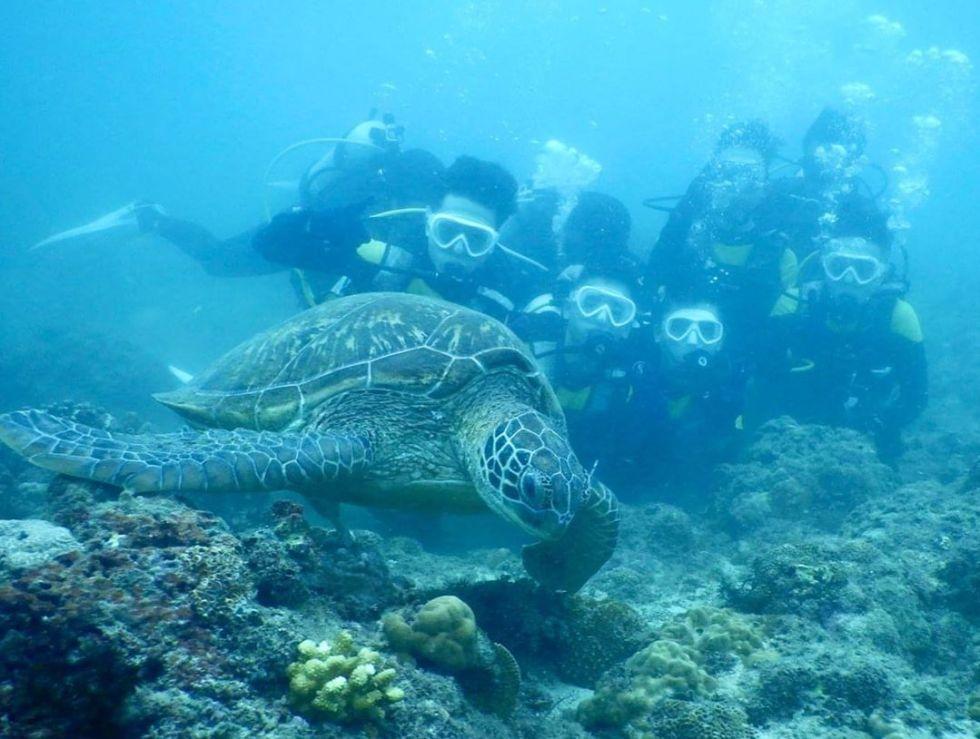 小琉球與海龜共泳|東南旅遊