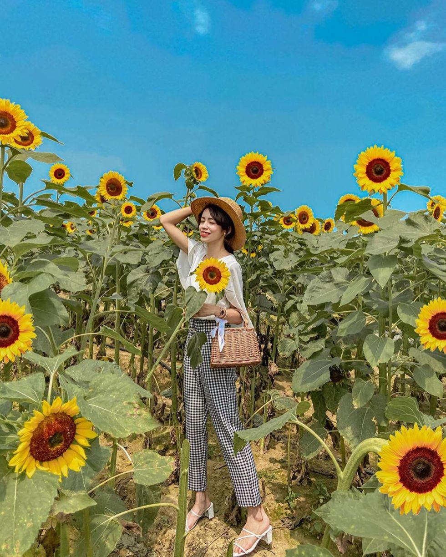 向陽農場|東南旅遊