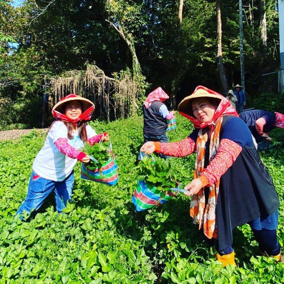 龍雲農場|東南旅遊
