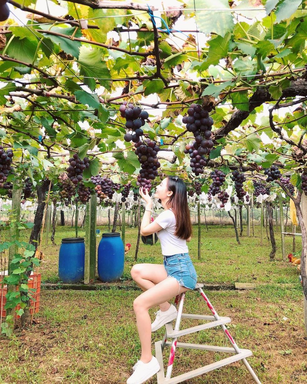 新峰農場|東南旅遊