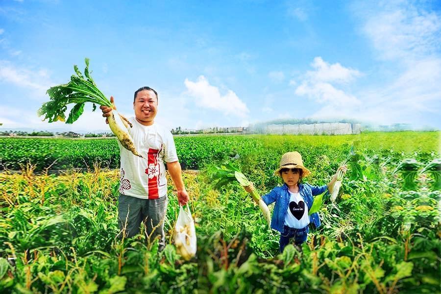 高雄美濃拔蘿蔔體驗 | 東南旅遊