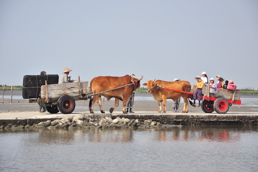 彰化鹿港海牛體驗 | 東南旅遊