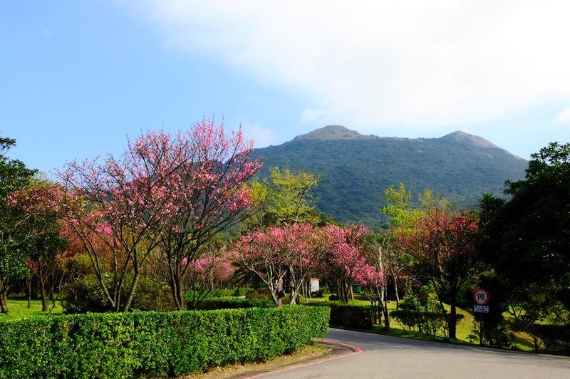 陽明山花季| 東南旅遊