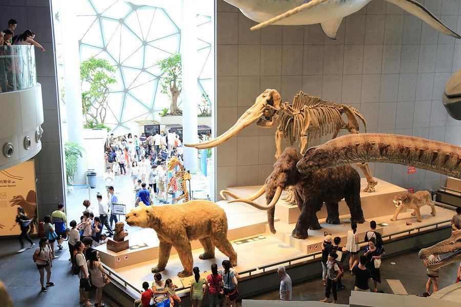 自然博物館|東南旅遊