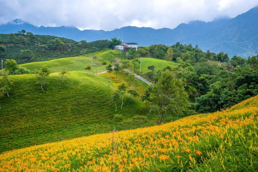 太麻里金針花|東南旅遊
