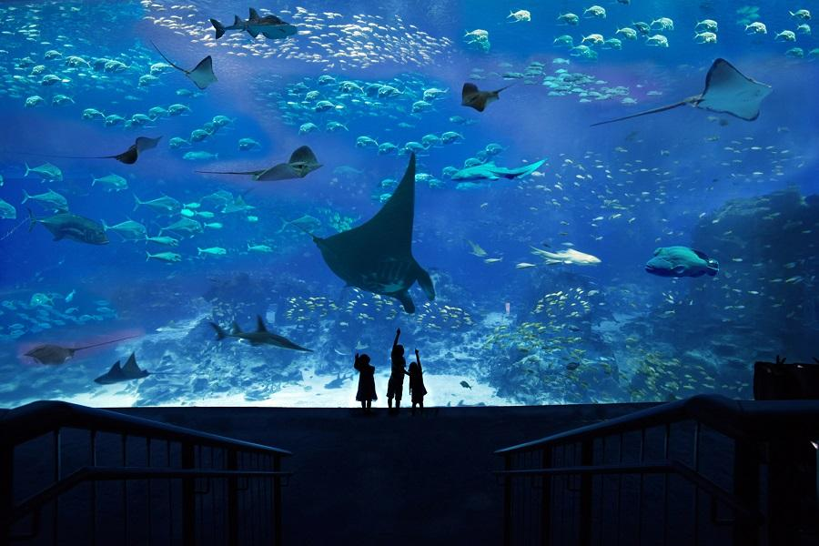 新加坡SEA海洋館 東南旅遊