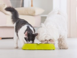 alimentation chien et chat bio