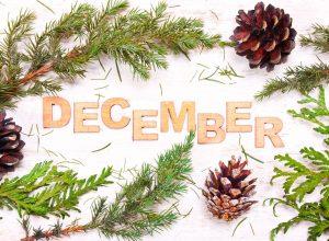 Les essentiels bio du mois de décembre