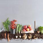 [FOCUS SUR …] Mon Petit Coin Vert : box de jardinage éco-responsable et bio