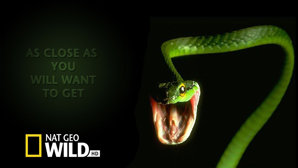 NAT-GEO-Ad-Snake