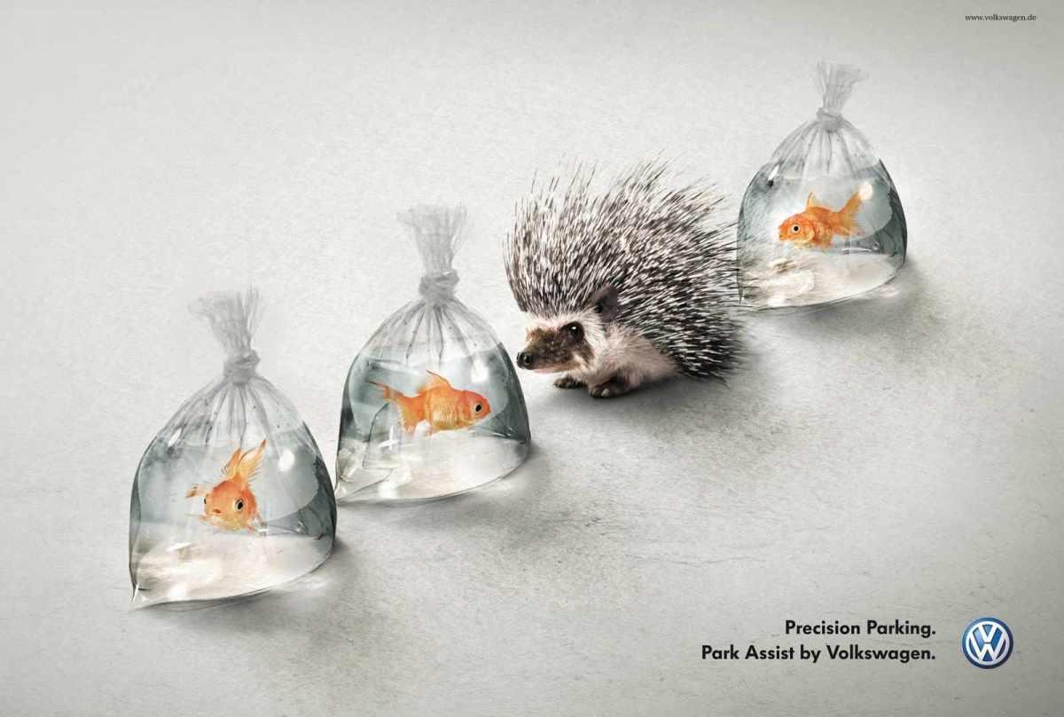 hedgehog_and_fish_aotw