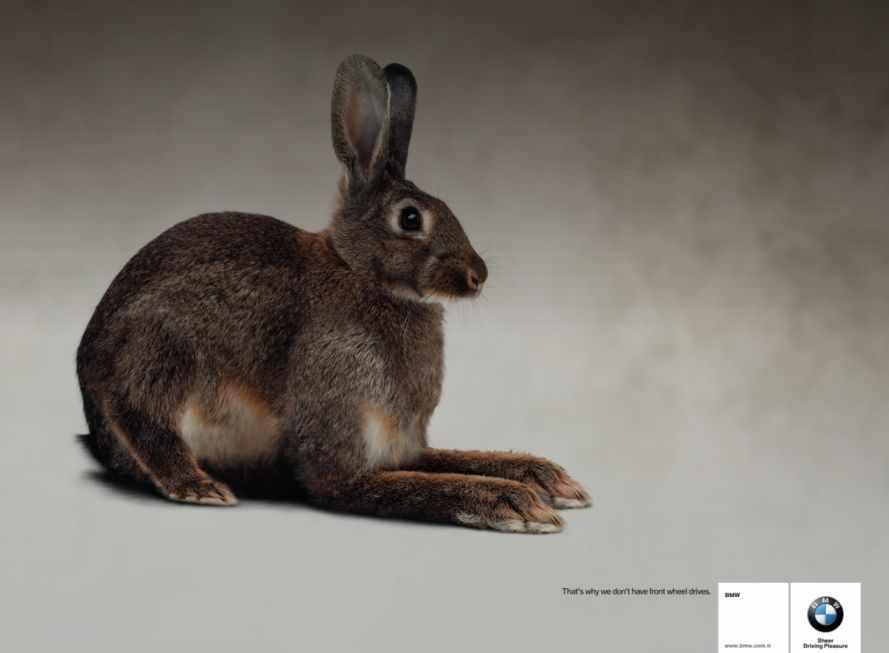 Rabbit_0