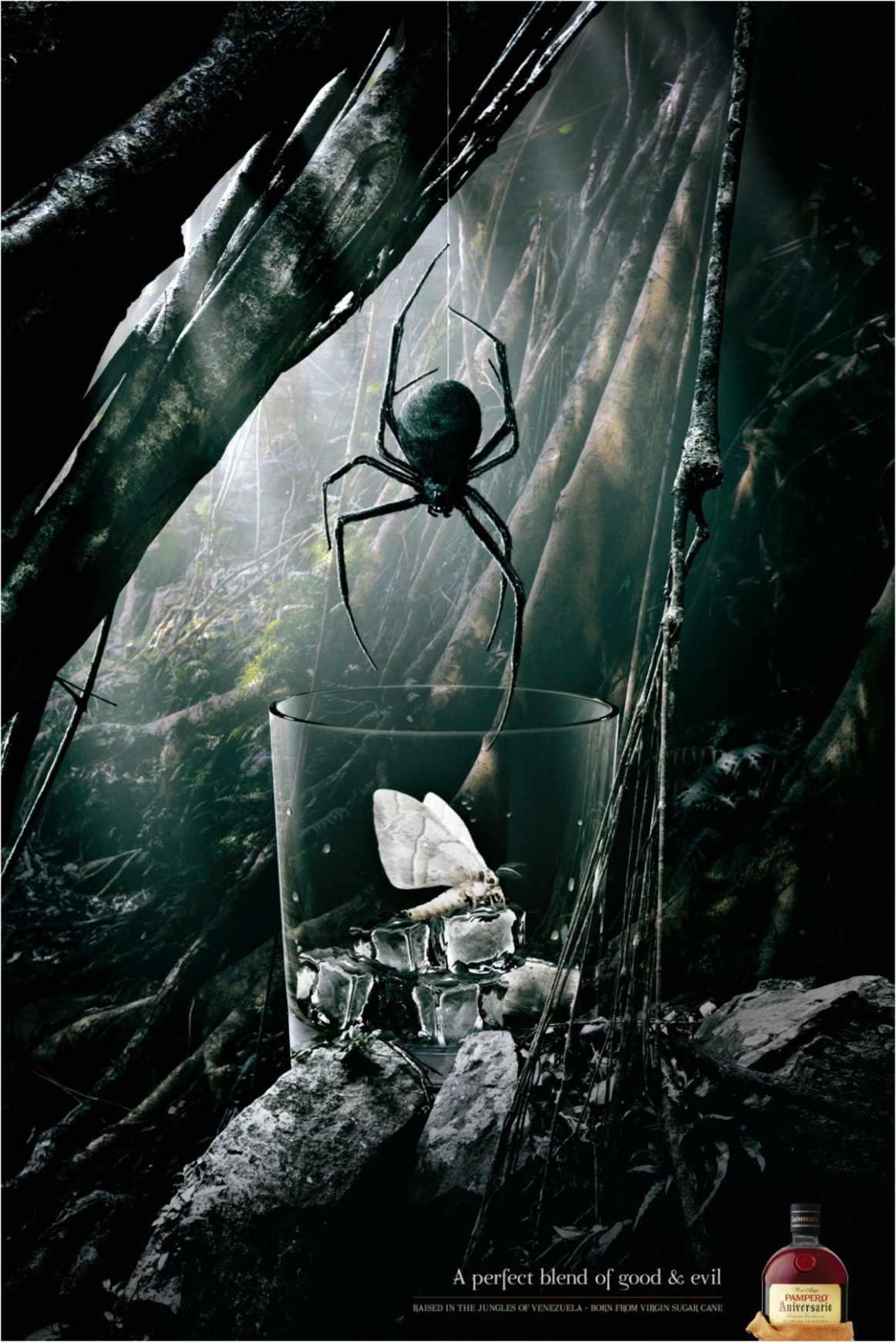 spider_aotw