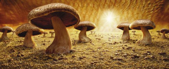Mushroom-Savanna3-e1403302211276