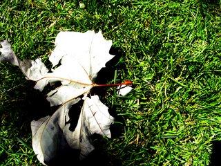 leavesandgrass.jpg