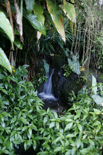 Ile de la Réunion - janvier 2011 - 607