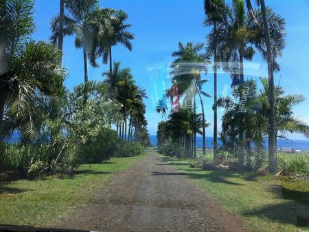 Ile de la Réunion - janvier 2011 - 586