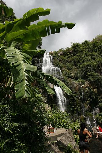Ile de la Réunion - janvier 2011 - 398
