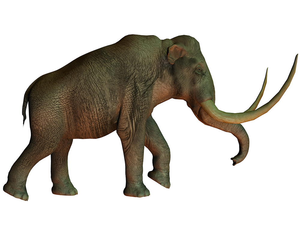 Illustrated columbian mammoth against white backdrop.
