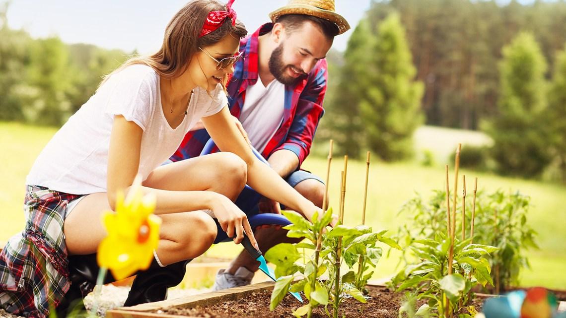 gardening tips for beginners