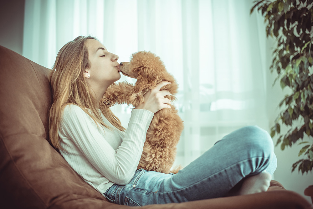 Woman playing with her poodle on a brown couch.