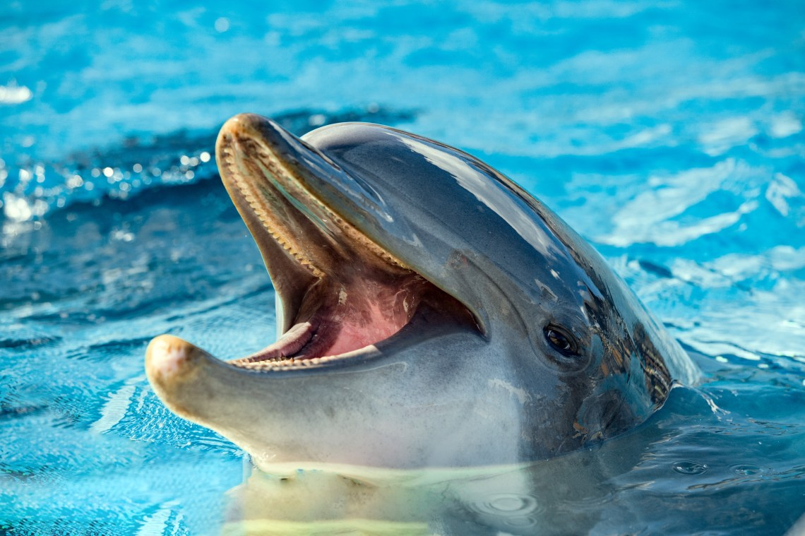A dolphin poking his head above water and smiling.