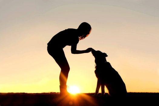 Adoptar un perro, una buena idea.