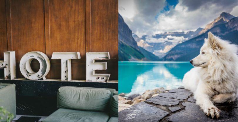 Salón de hotel y perro con paisaje