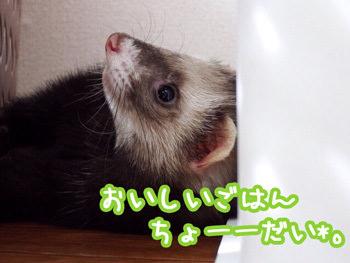 image-(53).jpg